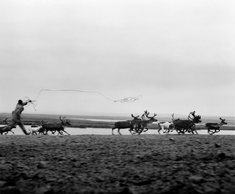 Andrei catches a reindeer © Jeroen Toirkens
