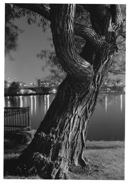 Trees River 6.jpg