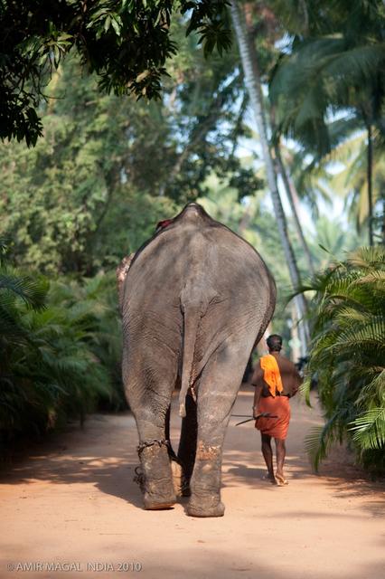 AMIR MAGAL-INDIA Retreat with Shiva Rea 2010-5155.jpg