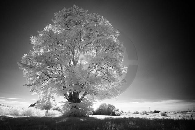 Landschaften_Copyright_374.jpg