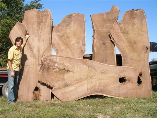 Slabs of a storm damaged Black Walnut tree