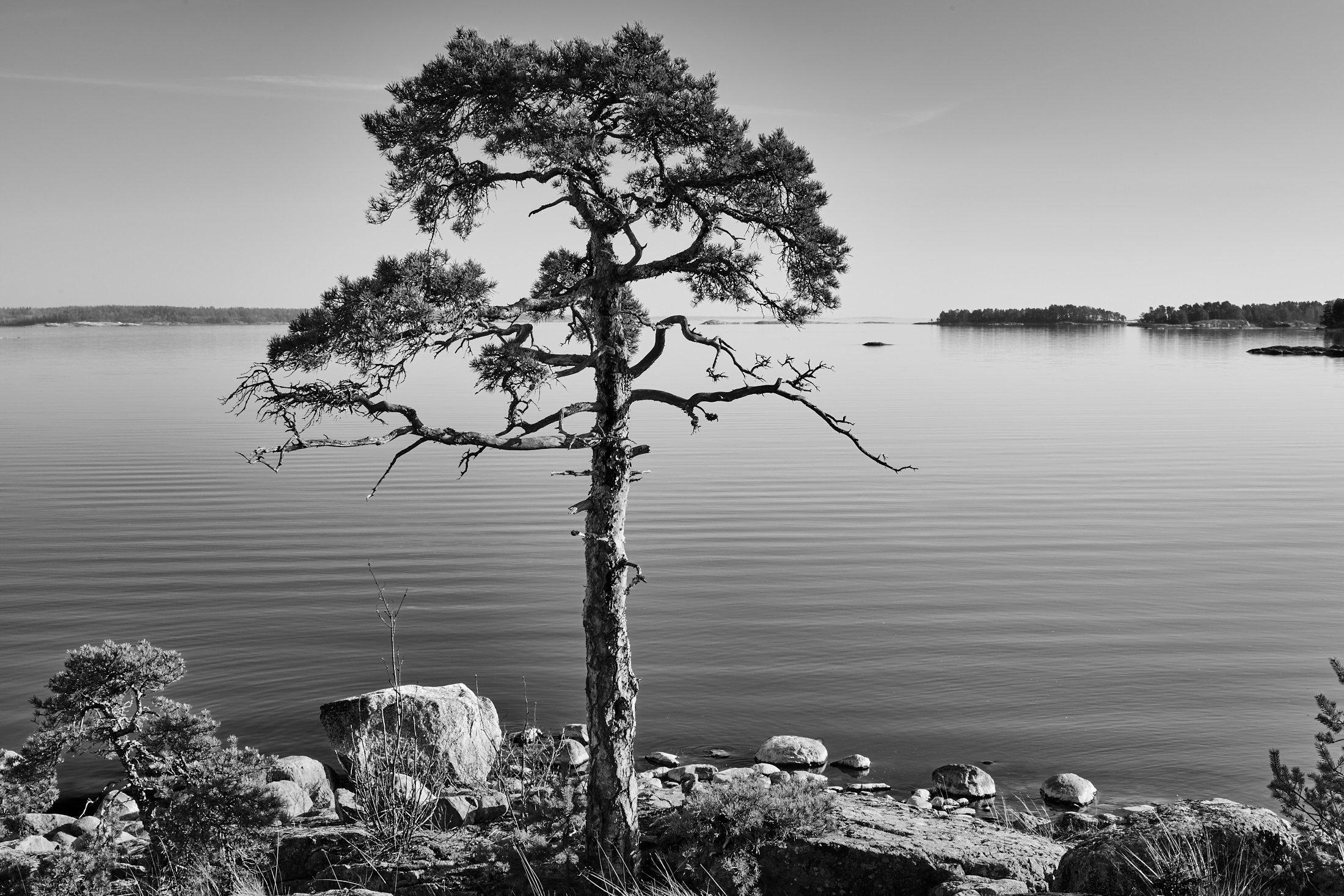 Pine View Klobbacka