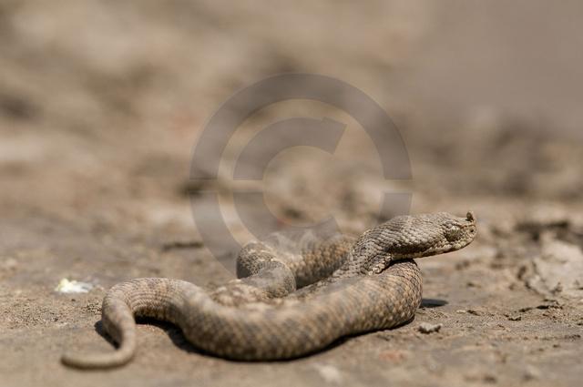 Tiere-Reptilien-3.jpg