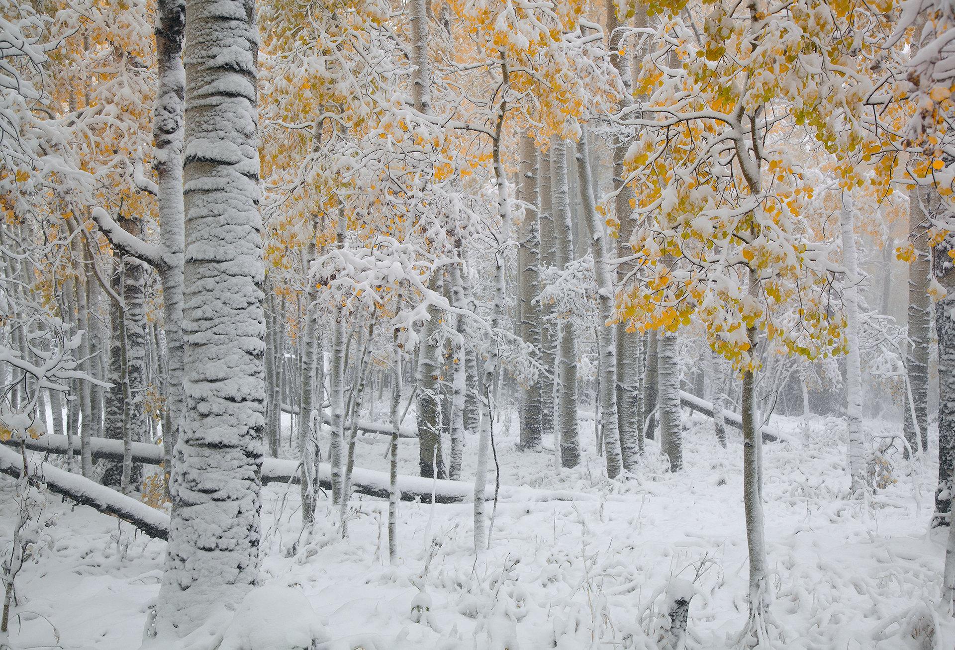 October Blizzard