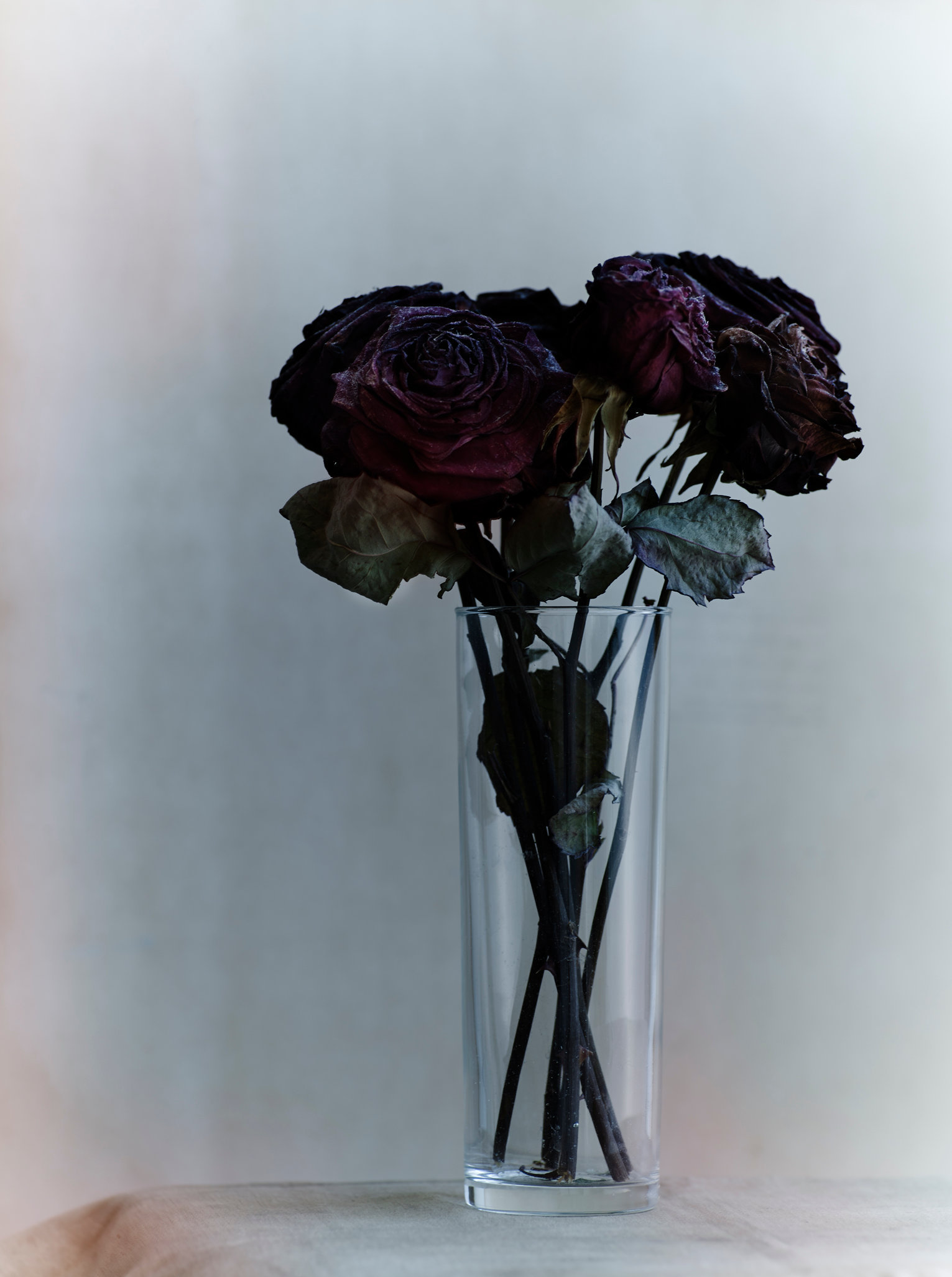 old roses89926 copy2.jpg