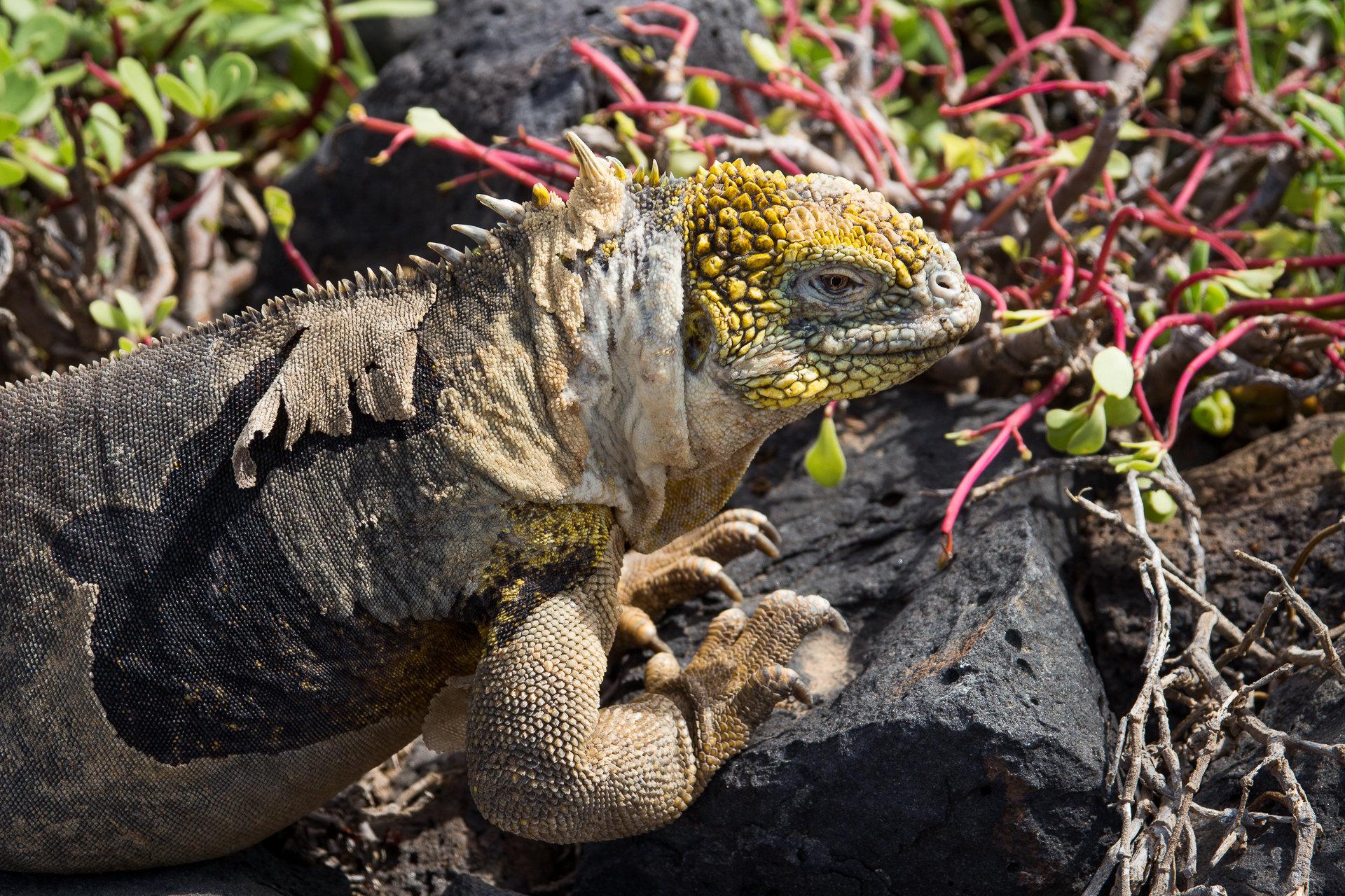 150419_Galapagos-1228.jpg