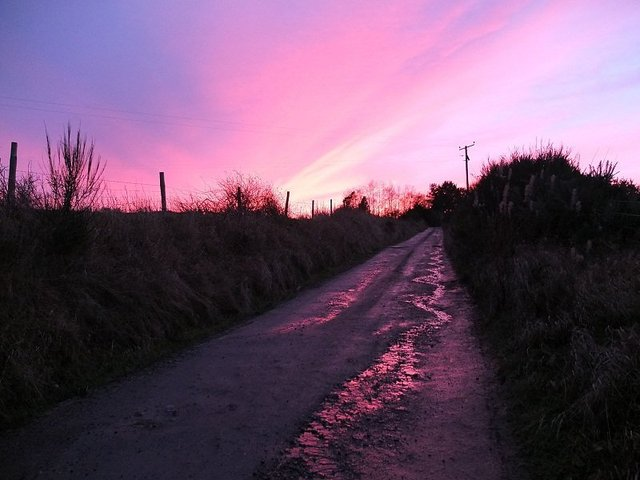 Into the Sunset by Alison Gracie