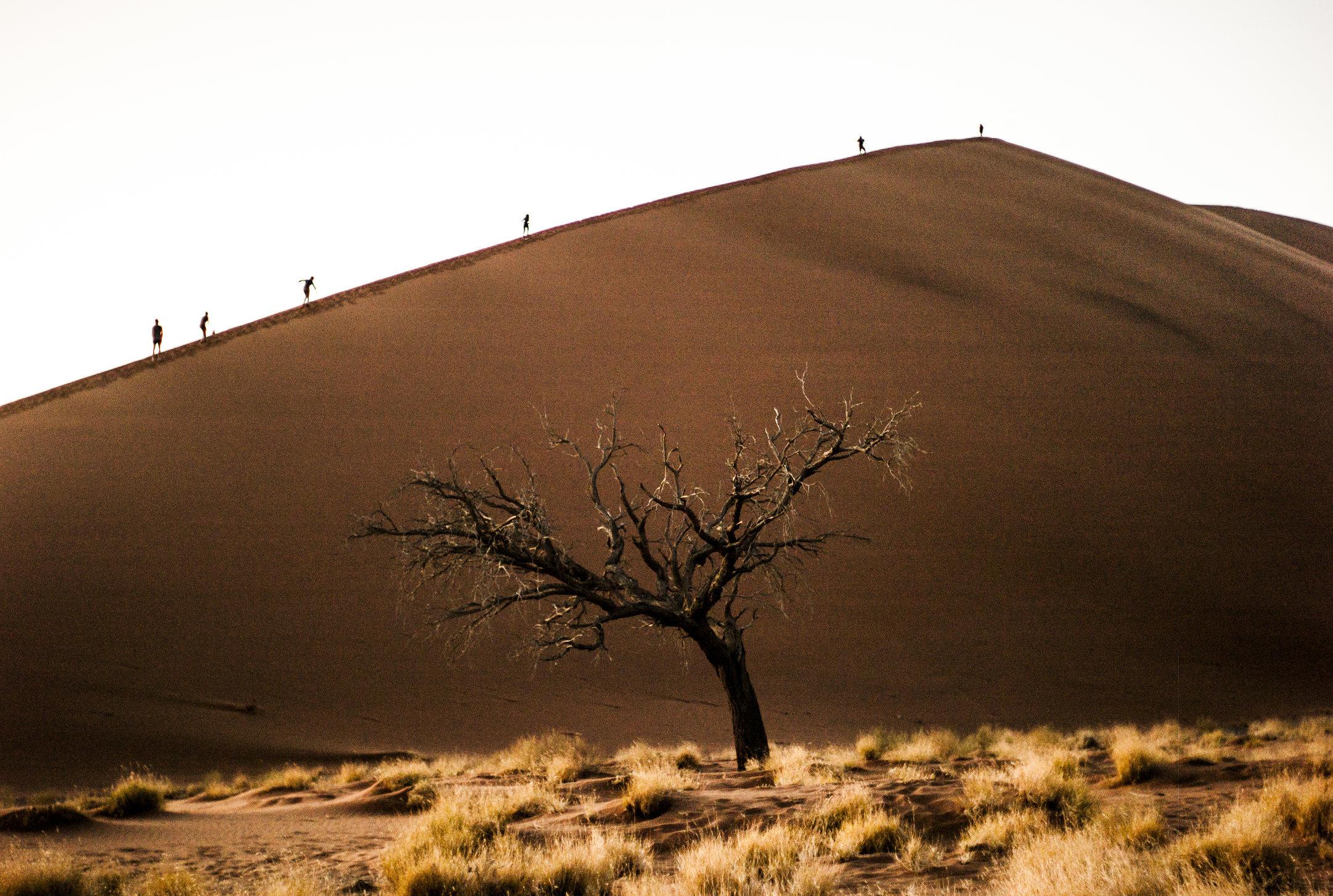 Dune 45, Namibia. 2013.