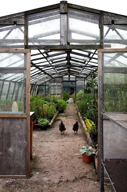 Hooksgreen Herb Nursery