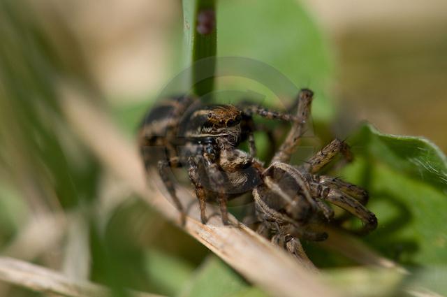 Insekten_Copyright_330.jpg