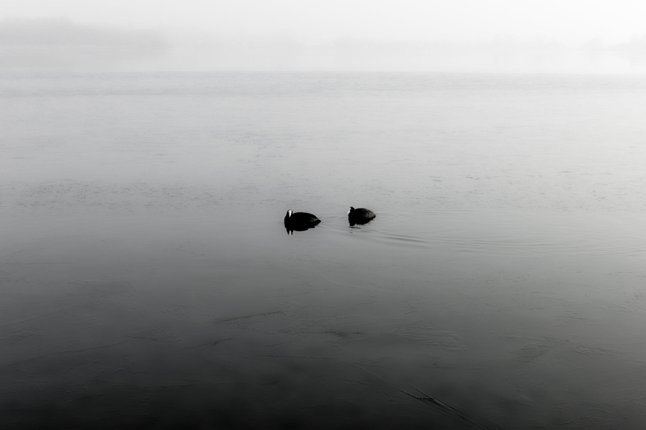 Waterkiekens 3_HDR.jpg