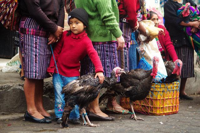Bird Market III