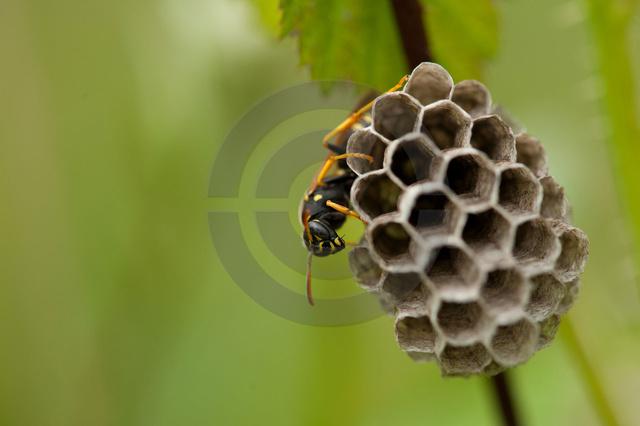 Insekten_Copyright_338.jpg