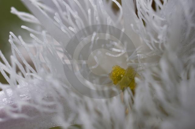 Pflanzen_Copyright_482.jpg