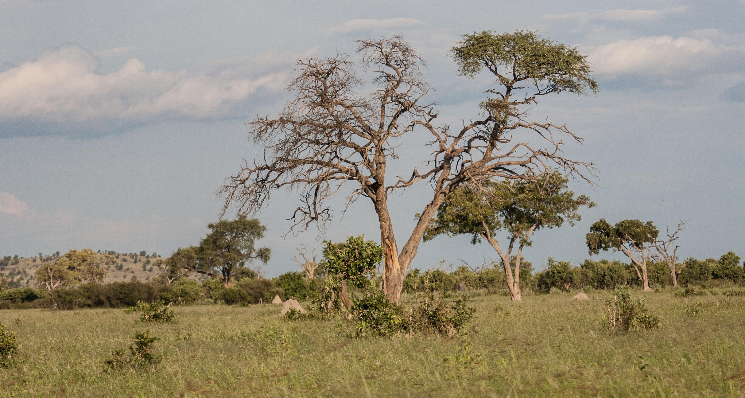 Savuti (ChobeNational Park)