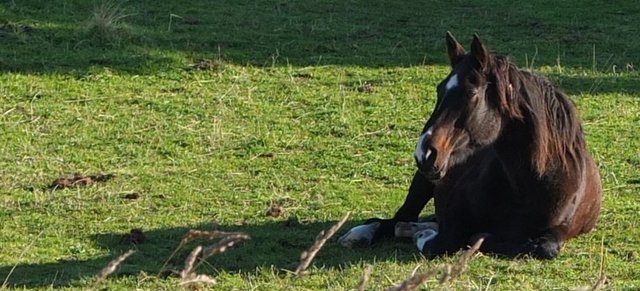Horse resting in early morning sun b y Ali Gracie