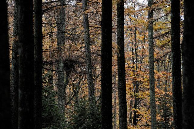 Ardennes 5