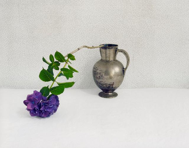Purple Hydrangea, c 2009