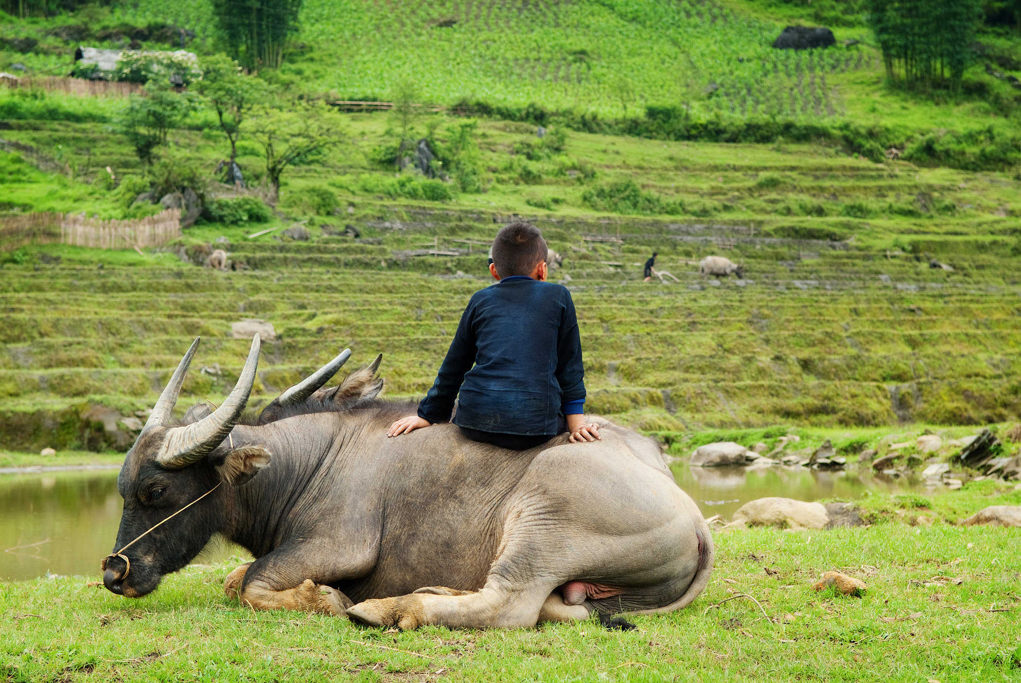 Child on Water Buffalo