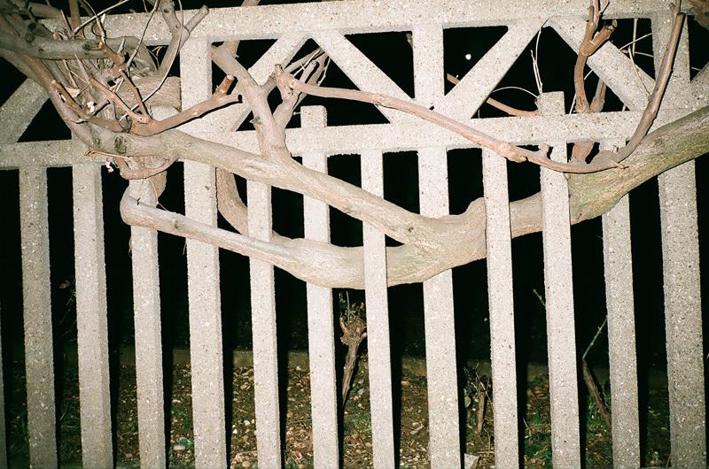 branche et grille de béton.jpg