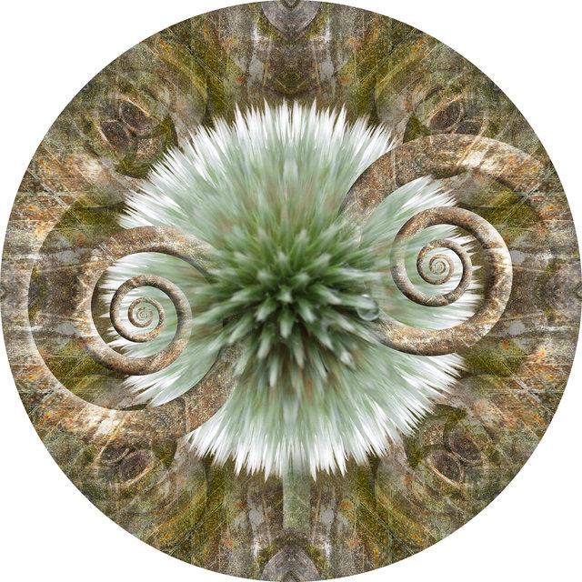 Circle 10 (Echinops)