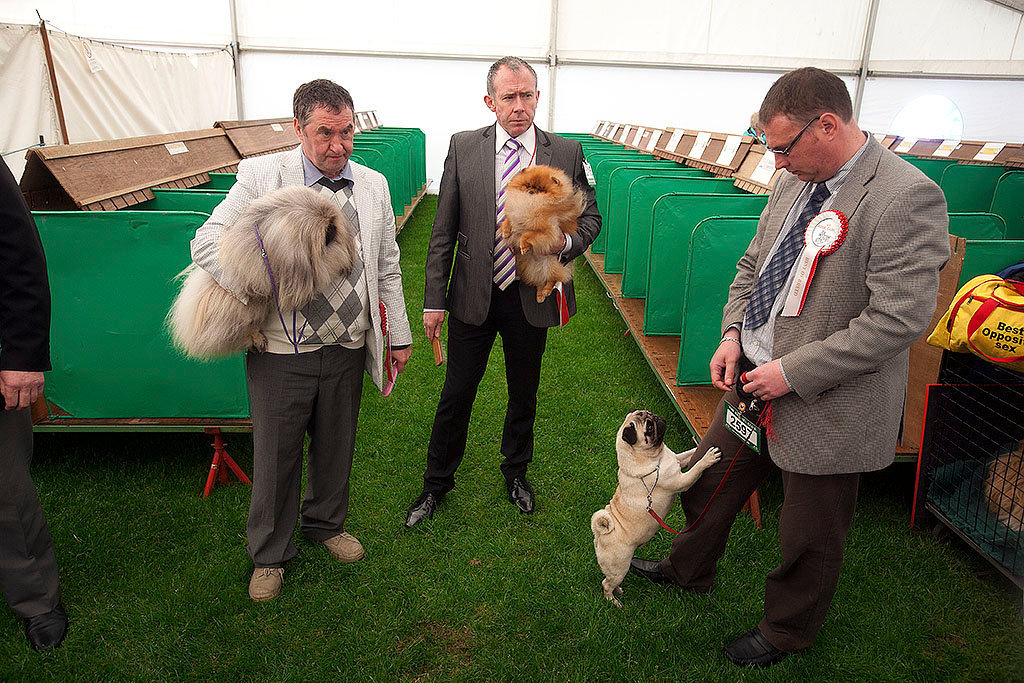 Edinburgh Dog Show