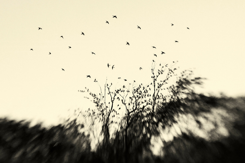 Winged Revelations
