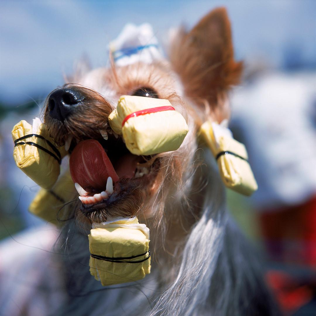 Hondenshow in Leeds, Engeland