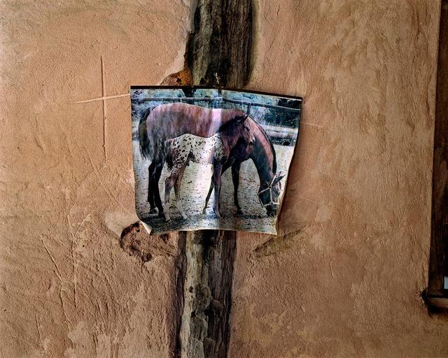 The home of horse Whisperer #2