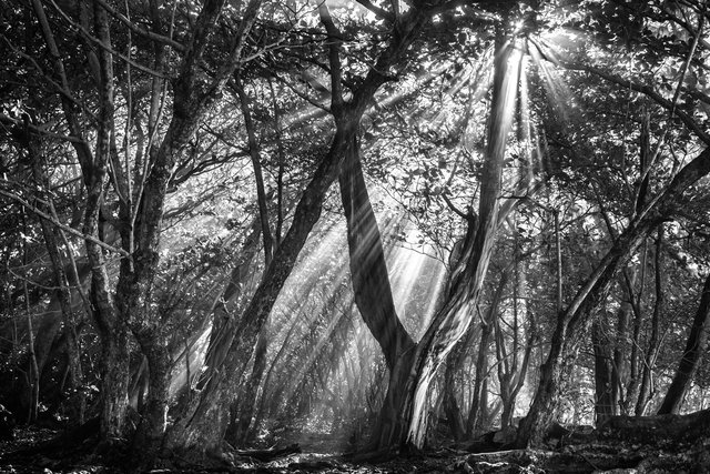 Ke'e Tree03.jpg