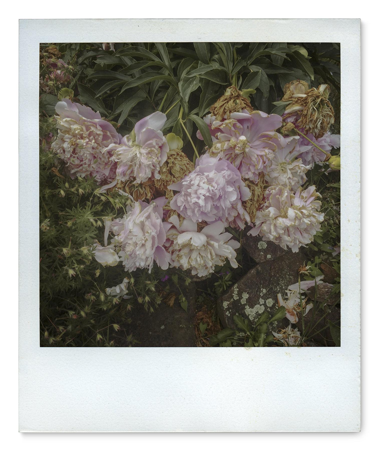 020_Polaroid SX70_IMG_2430.jpg