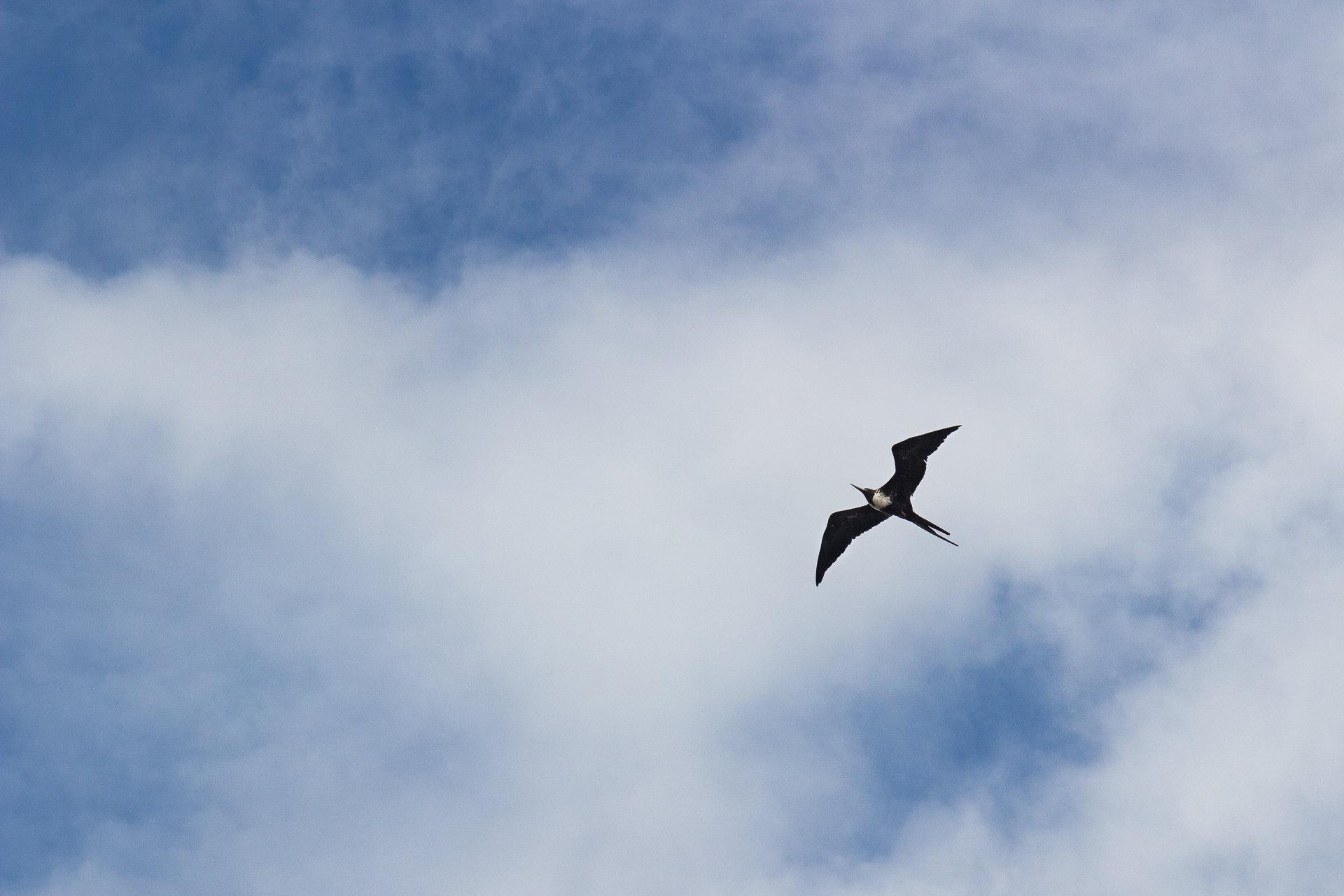 150419_Galapagos-1188.jpg