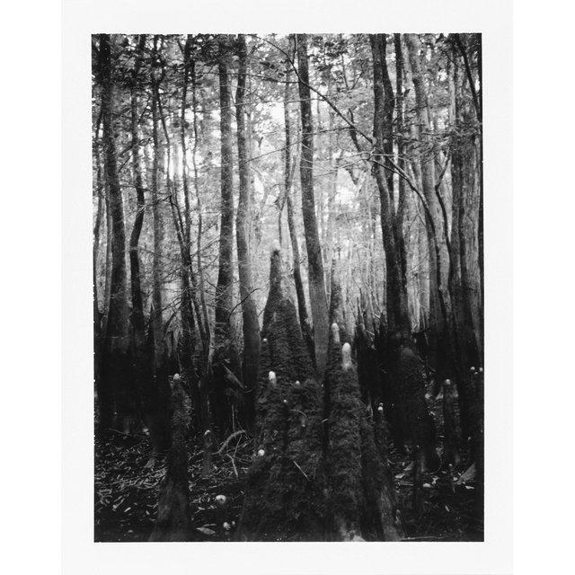 cypressknees-ervin.jpg