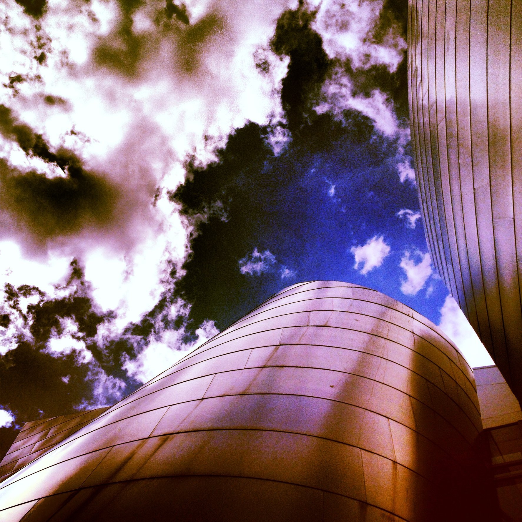 WALT DISNEY CONCERT HALL - ROSE 9