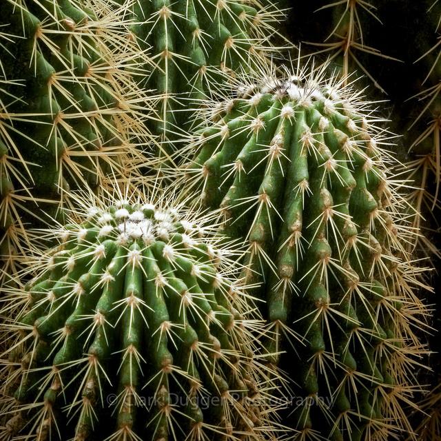 Barrel_Cactus_02_8x8.psd.jpg