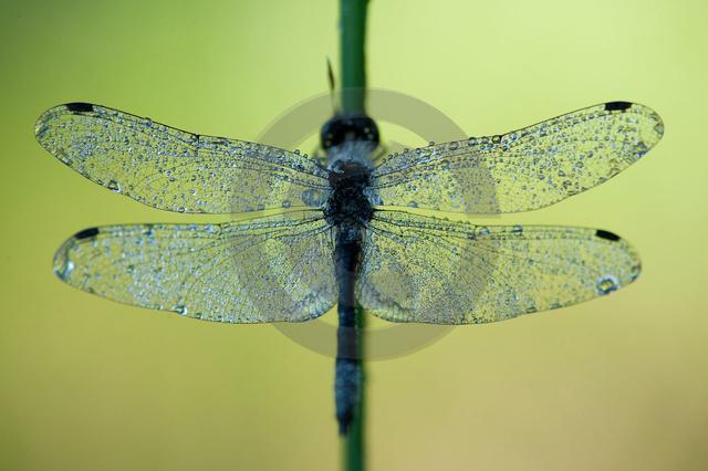 Insekten_Copyright_539.jpg