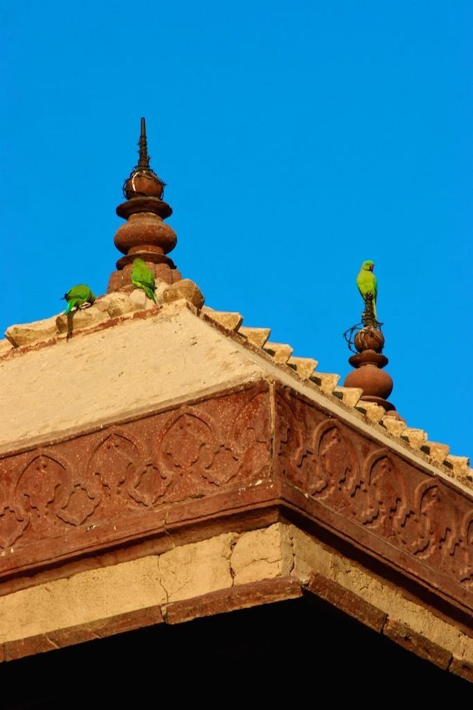 Pássaros no Palácio de Akbar