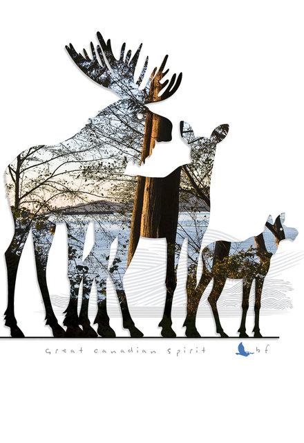 Moose-20.jpg