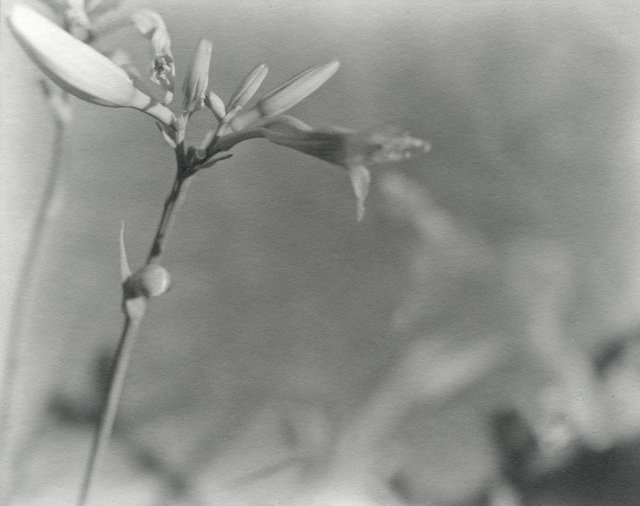 Lily 2, Chicago, 1997