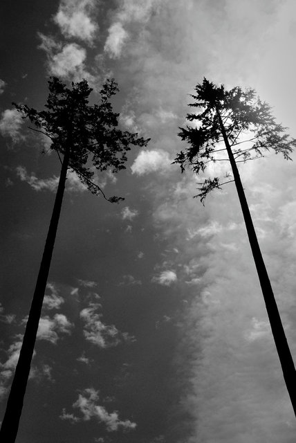 Tree-18bw.jpg