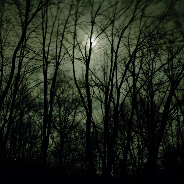 Maple in the Moonlight, New Jersey, 2009