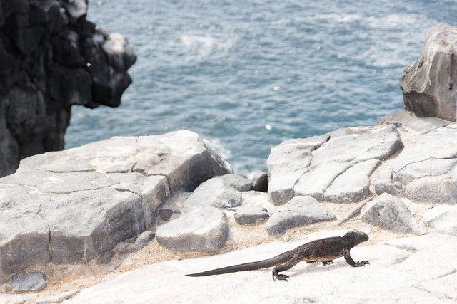 150419_Galapagos-1239.jpg