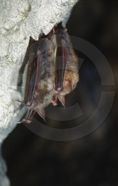 Tiere-Fledermaus-9.jpg
