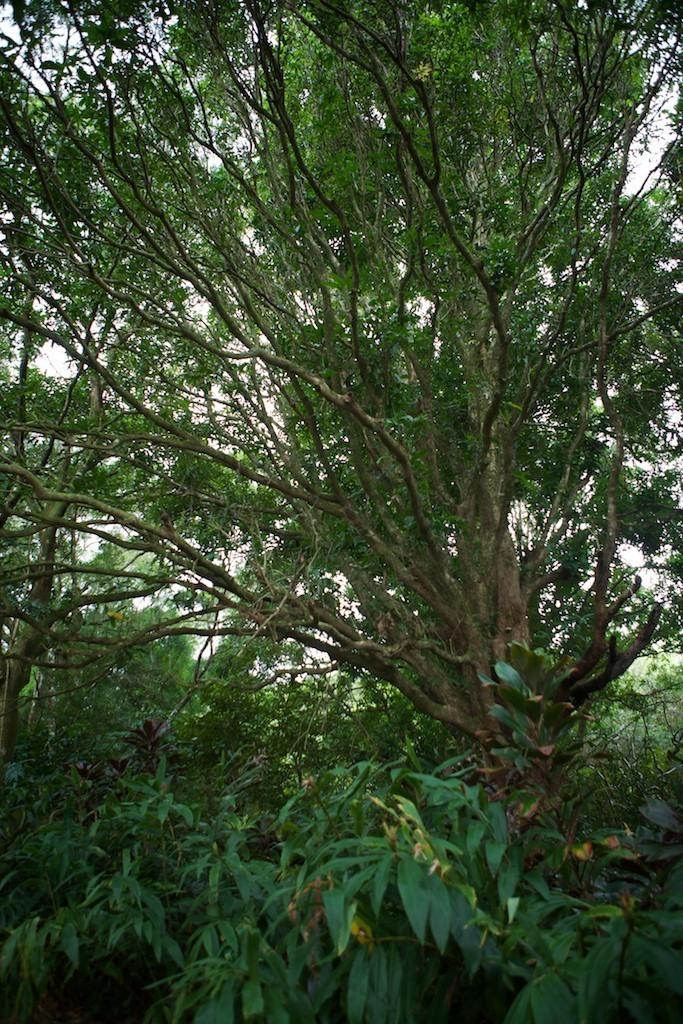 Árvore em Twin Falls