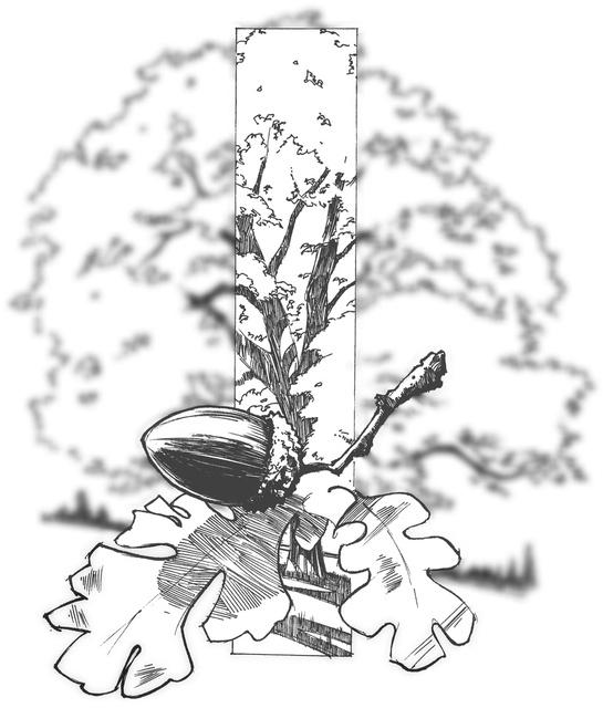tree1001.jpg