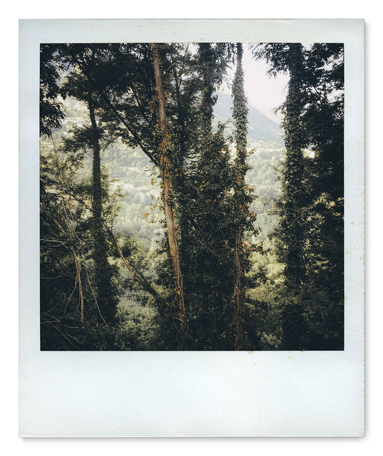 052_Polaroid SX70_IMG_2555.jpg