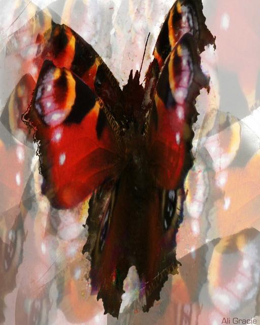 Butterfly Dance by Ali Gracie