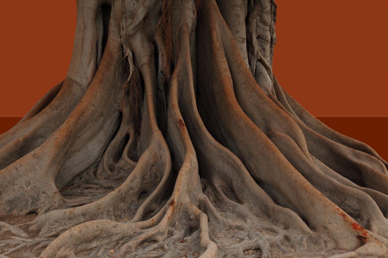valencia tree 1
