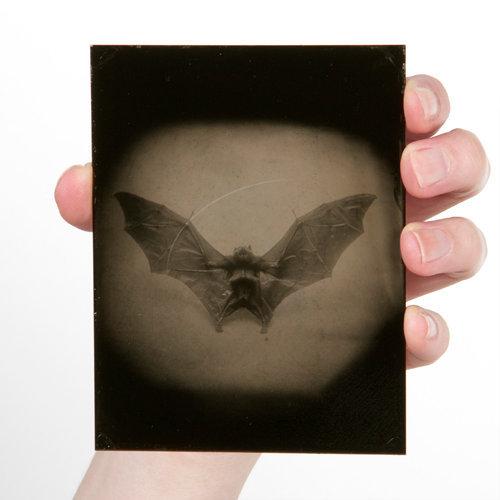 Wings #8