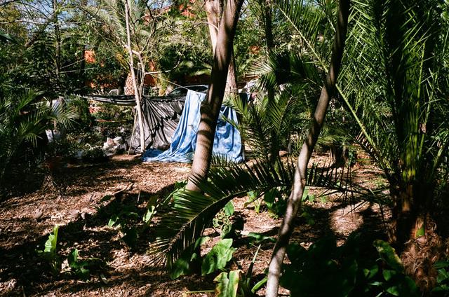 bache bleu et palmiers.jpg